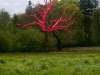 Proof! The Pink Tree